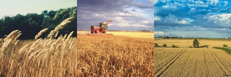 Bezpłatne kursy dla rolników